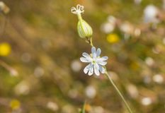 Propeller-like flower in a wild autumnal field Stock Photo