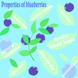 Properties of blueberries Royalty Free Stock Images