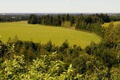 Abajo en la granja de las ovejas Imagen de archivo libre de regalías