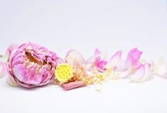 Propiedades de alimentación del loto rosado Foto de archivo