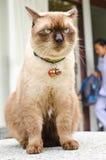 Propietarios que esperan del gato para. fotos de archivo libres de regalías