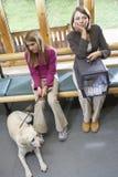Propietarios que se sientan en área de recepción de los veterinarios Fotos de archivo