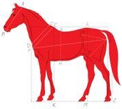 Proporções do cavalo Imagem de Stock