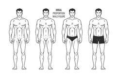 Proportion idéale, chiffre masculin Homme tiré par la main d'ensemble dans la pleine croissance, humaine Illustration de vecteur Images stock