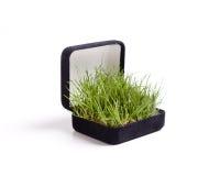 Proposta dell'erba Immagini Stock Libere da Diritti