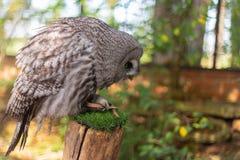 Propres moyens fait un atterrissage au zoo de Yorkshire photos libres de droits