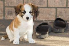 Propriétaire d'ami fidèle de chien Images stock