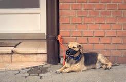 Propriétaire de attente de chien métis triste Photo libre de droits