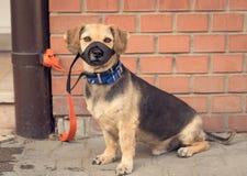 Propriétaire de attente de chien métis triste Image stock