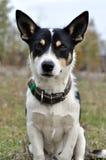 Propriétaire de attente de chien sans abri Photos libres de droits
