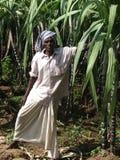 Propriétaire de canne à sucre après tsunami Image libre de droits
