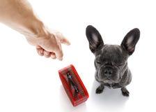 Propriétaire punissant son chien Photos stock