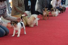 Propriétaires avec des animaux familiers à une exposition canine photographie stock