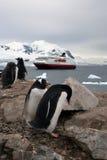 Propriétaires de l'Antarctique Photos libres de droits