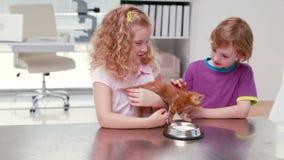 Propriétaires heureux choyant leur chat clips vidéos