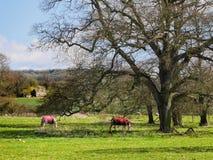 A propriedade aterra o castelo de Sudeley perto de Winchcombe Cotswolds Foto de Stock Royalty Free