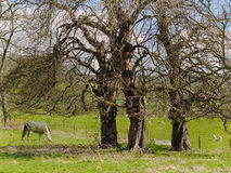 A propriedade aterra o castelo de Sudeley perto de Winchcombe Cotswolds Fotos de Stock Royalty Free