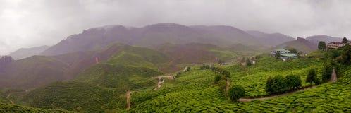 Propriedade chuvosa do chá em Malaysia Imagens de Stock Royalty Free
