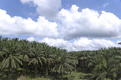 Propriedade da palma de petróleo foto de stock