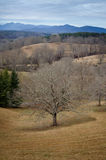 As terras da propriedade de Biltmore Foto de Stock Royalty Free