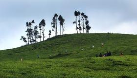 Propriedade do chá com turista Imagem de Stock Royalty Free