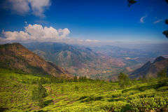 Propriedade do chá de Kolukkumalai, Munnar, Índia Fotos de Stock