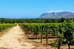 Propriedade do vinho do constantia de Groot Fotografia de Stock Royalty Free