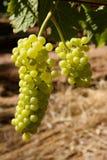 Propriedade do vinho do constantia de Groot Foto de Stock