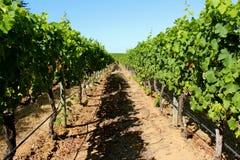 Propriedade do vinho do constantia de Groot Fotos de Stock Royalty Free