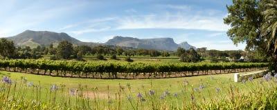Propriedade do vinho em Cape Town imagem de stock