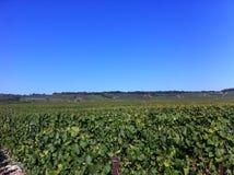 Propriedade do vinho no champanhe & no x28; france& x29; Fotografia de Stock