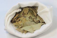 Propriedades medicinais das folhas de louro Fotografia de Stock Royalty Free