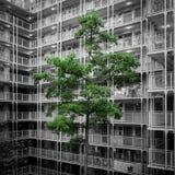 Proprietà dell'edilizia popolare in Hong Kong Fotografie Stock Libere da Diritti