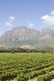 Proprietà scenica Sudafrica del vino di Boland del capo Fotografia Stock