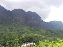 Proprietà Sri Lanka del giardino di tè Fotografie Stock