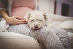 Proprietário do cão, mulher gravida fotografia de stock royalty free