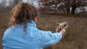 Proprietário fêmea que chama seu cão na natureza do outono filme