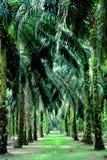 Proprietà della palma da olio Fotografie Stock