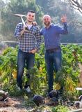 Proprietari di ranch che coltivano cavolo Fotografia Stock Libera da Diritti