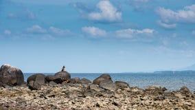 Proprietario aspettante del cane sulla spiaggia immagini stock