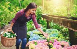 Proprietário consideravelmente novo do berçário que aponta às flores Imagem de Stock