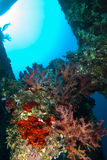 Propulsor encrusted coral de un naufragio. Mar Rojo Fotos de archivo libres de regalías