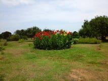 Prosciutto otto del giardino Immagini Stock Libere da Diritti