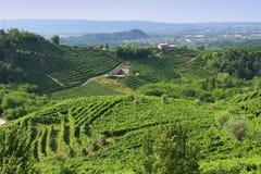 Prosecco hills. Hillside vineyards of Prosecco - Valdobbiadene - Italy Royalty Free Stock Photography