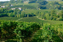 Prosecco hills Royalty Free Stock Photography