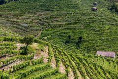 Prosecco region, view of hills with vineyards, sunny day Royalty Free Stock Photography