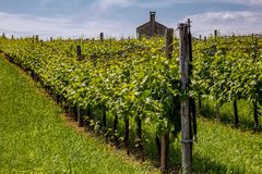 Prosecco region, view of hills with vineyards, sunny day Royalty Free Stock Images
