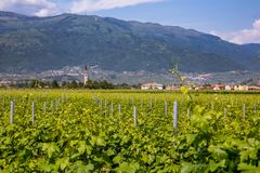 Prosecco region, view of hills with vineyards, sunny day Stock Images