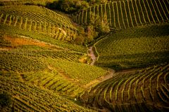 Prosecco region, view of hills with vineyards, sunset. Picturesque hills with vineyards of the Prosecco sparkling wine region in Valdobbiadene - Italy stock images