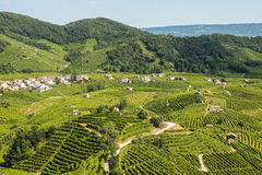 Prosecco vineyards in Valdobbiadene town Stock Photos